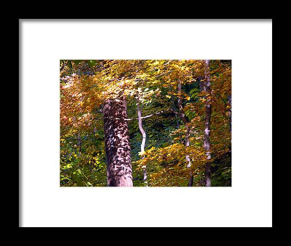 Fall Trees Framed Print featuring the photograph Falls Splendor by John Lautermilch