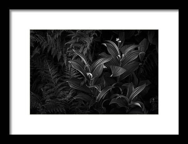 Mount Rainier Framed Print featuring the photograph False Hellebore by Thorsten Scheuermann