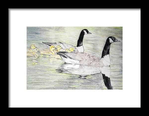 Canadian Geese Framed Print featuring the drawing Family Outing by Debra Sandstrom