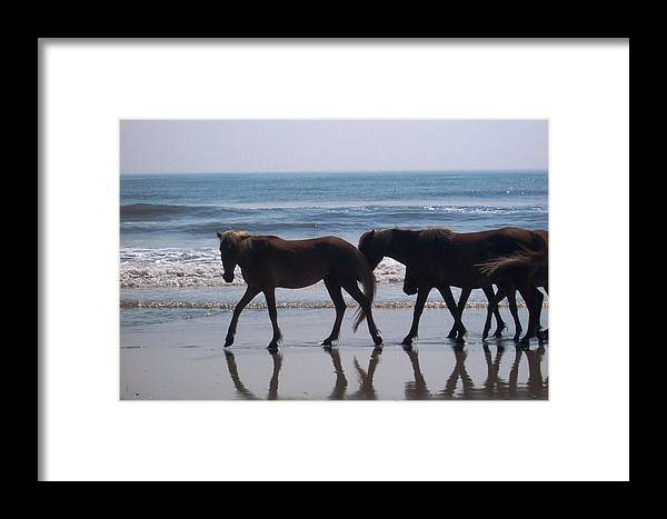 Horses Framed Print featuring the photograph Family Stroll by James and Vickie Rankin