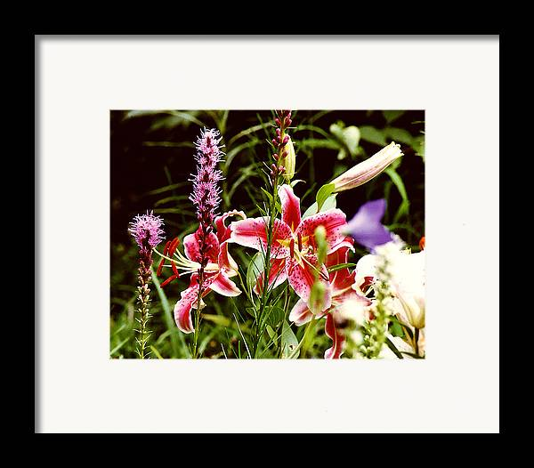 Flowers Framed Print featuring the photograph Fancy Lilies In Garden by Roger Soule