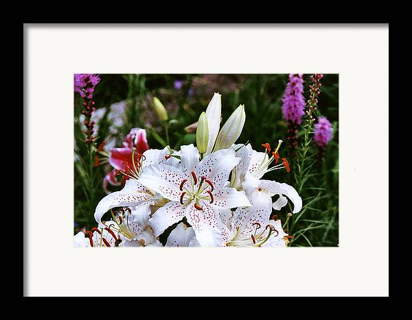Summer Framed Print featuring the photograph Fancy White Lily In Garden by Roger Soule