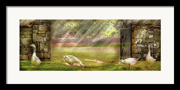 Savad Framed Print featuring the photograph Farm - Geese - Birds Of A Feather - Panorama by Mike Savad