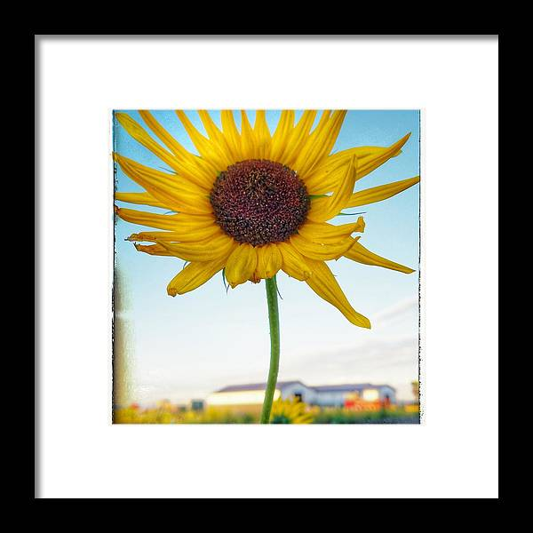 Framed Print featuring the photograph Farmlife by Beth LaFata