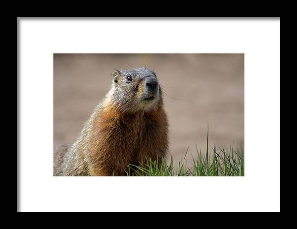 Wyoming Framed Print featuring the photograph Fearless by Frank Madia