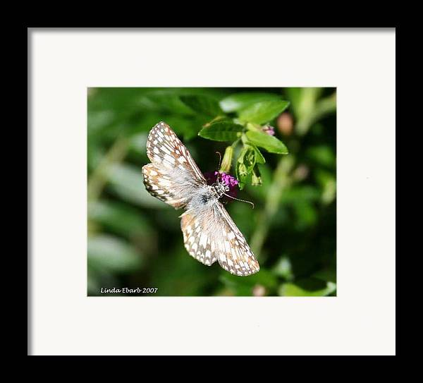 Insect Framed Print featuring the photograph Feast Of Mexican Heather by Linda Ebarb