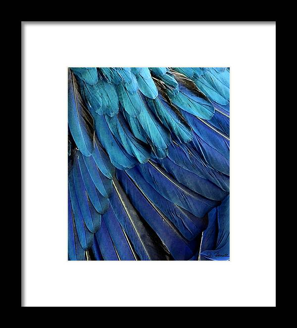 Feather Framed Print featuring the photograph Feathered by Joe Bonita