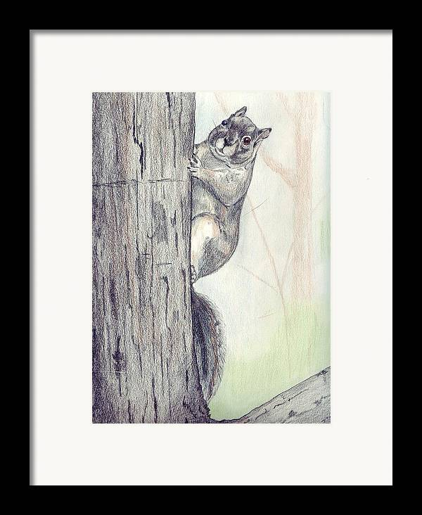 Color Pencil Framed Print featuring the drawing Feeder Raider by Debra Sandstrom
