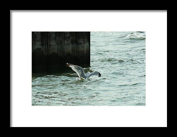 Ephriam Framed Print featuring the photograph Feeding Time In Ephraim Wi by Tommy Anderson