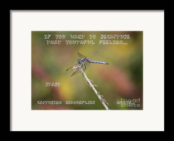 Dragonfly Art Framed Print featuring the photograph Feel Young Again by Carol Groenen