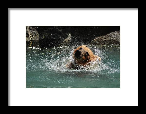 Bear Framed Print featuring the photograph Feels So Good by Margaret Augustine