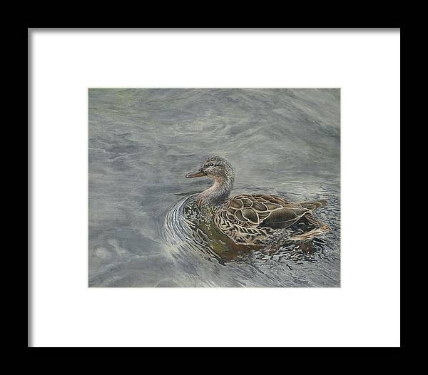 Fowl Framed Print featuring the painting Female Duck by Edmund Price
