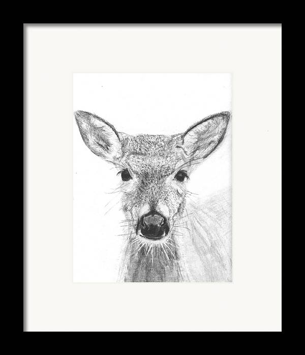 Deer Framed Print featuring the drawing Female White-tailed Deer by Marqueta Graham