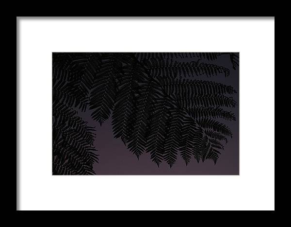 Silhouette Framed Print featuring the photograph Fern At Dusk by Jean Booth