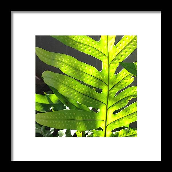 Ferns Framed Print featuring the photograph Fern Delight by Pamela Bushnell
