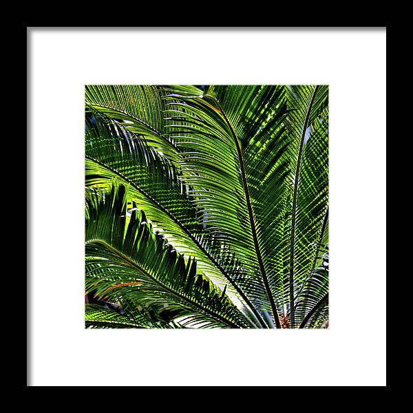 Fern Framed Print featuring the photograph Fern II by David Patterson
