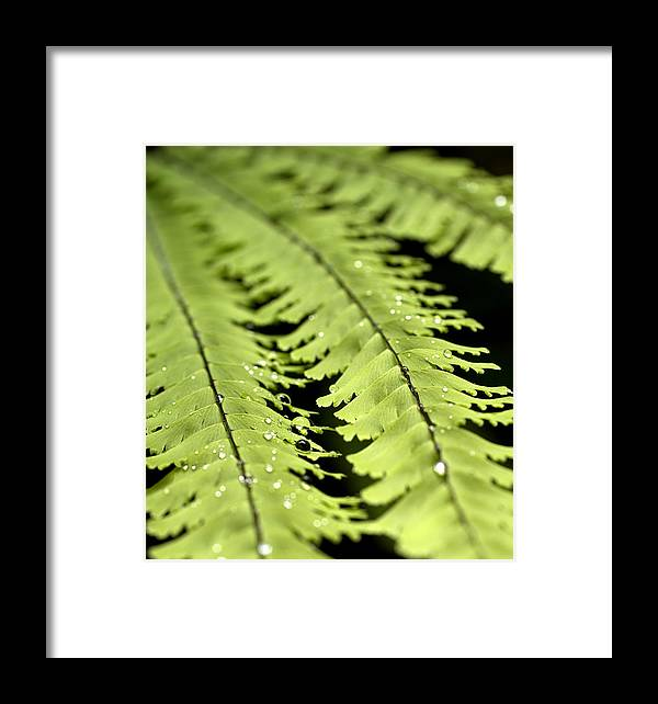 Ferns Framed Print featuring the photograph Fern by Jessica Wakefield