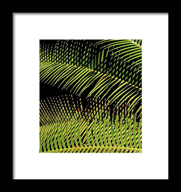 Semi-abstract Framed Print featuring the photograph Fern-palm Abtract by Bonnie See