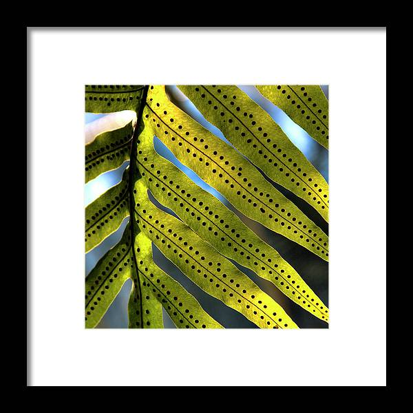 Fern Framed Print featuring the photograph Fern Spores by David Patterson