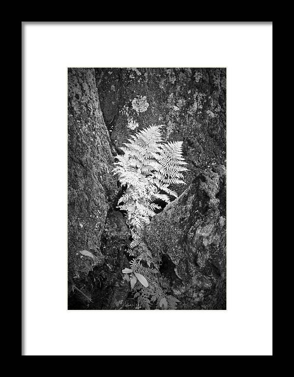 Fern Framed Print featuring the photograph Fernglow by Harry H Hicklin