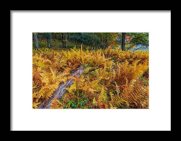 Ferns Framed Print featuring the photograph Ferns Along A Trail by Jason Lemley