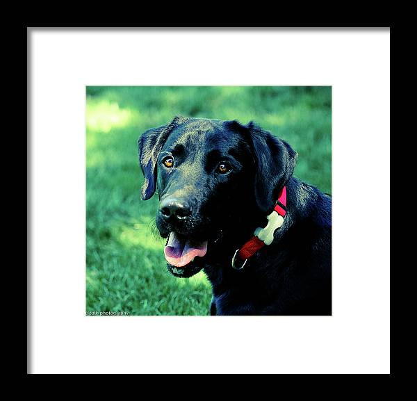Dogs Framed Print featuring the photograph Fetch Resdy by Liz Santie