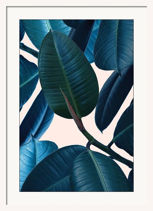 Ficus elastica 2 by Mark Ashkenazi