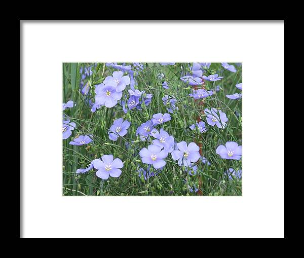 Framed Print featuring the photograph Field Of Blue by Dennis Wilkins