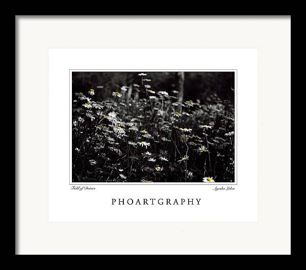Flowers Framed Print featuring the photograph Field Of Daisies by Ayesha Lakes