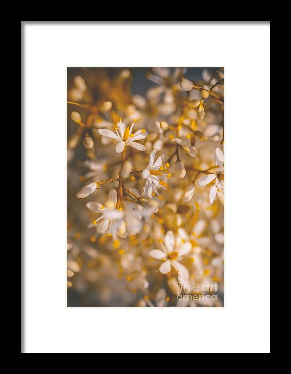 Kindness Framed Print featuring the photograph Field Of Kindness by Jorgo Photography - Wall Art Gallery