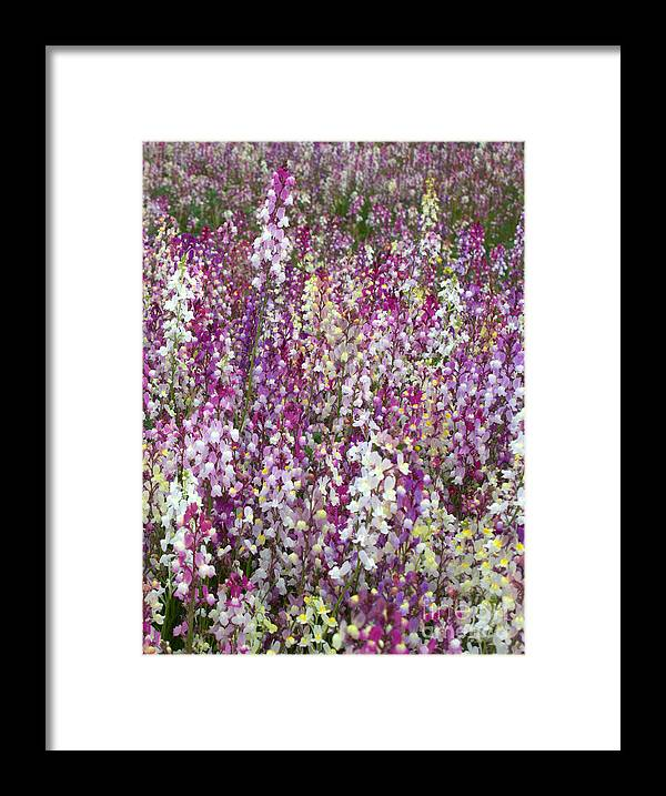 Flowers Framed Print featuring the photograph Field Of Multi-colored Flowers by Carol Groenen