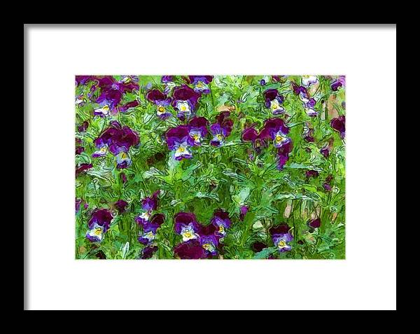 Digital Photograph Framed Print featuring the photograph Field Of Pansy's by David Lane