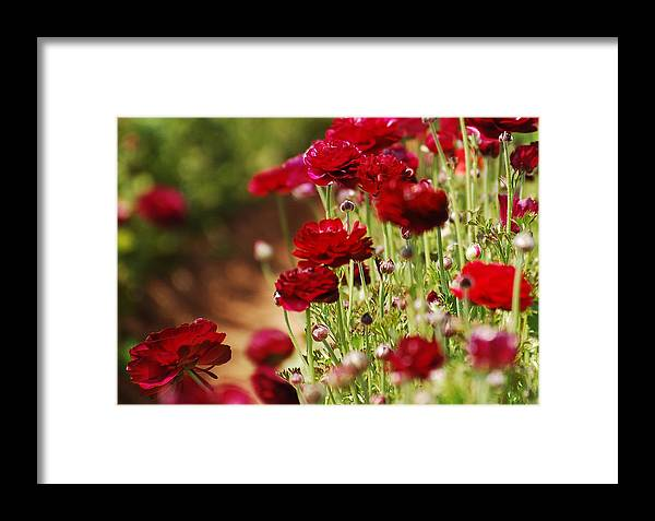 Red Framed Print featuring the photograph Field Of Red by Jean Booth