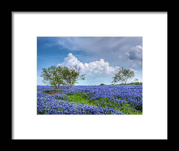 Bloom Framed Print featuring the photograph Field Of Texas Bluebonnets by David and Carol Kelly