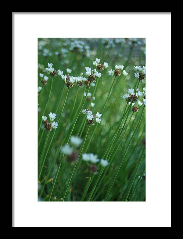 Flowers Framed Print featuring the photograph Field Of Tiny Flowers by Christopher Larimore