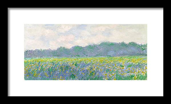 Field Framed Print featuring the painting Field of Yellow Irises at Giverny by Claude Monet