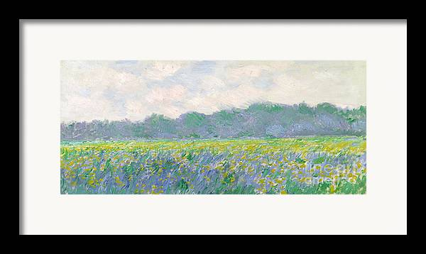Framed Print featuring the painting Field Of Yellow Irises At Giverny by Claude Monet