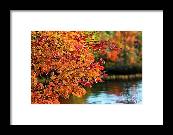 Maine Framed Print featuring the photograph Fiery Show by Alana Ranney
