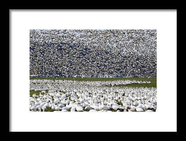 Wildlife Framed Print featuring the photograph Filling Sky Pg012 by Yoshiki Nakamura