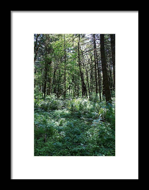 Nature Framed Print featuring the photograph Filtered Forest Sunlight In Oregon by Ben Upham III