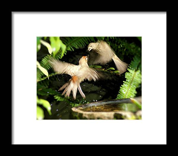 Bird Framed Print featuring the photograph Finch Spat by Ellen Lerner ODonnell