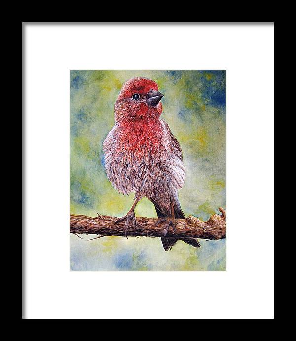 House Finch On Tree Branch Framed Print featuring the painting Finchy by JoLyn Holladay
