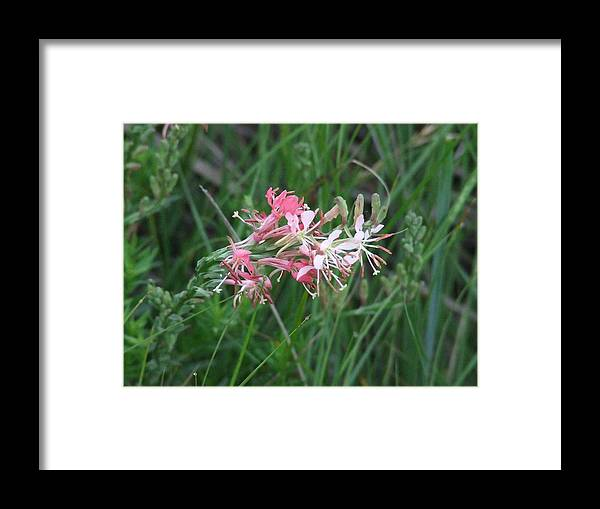 Framed Print featuring the photograph Fireworks by Dennis Wilkins