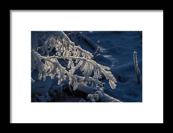 Frost Framed Print featuring the photograph First Light by Alana Thrower