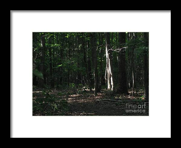 Nature Framed Print featuring the photograph First Light by Elizabeth Ellis