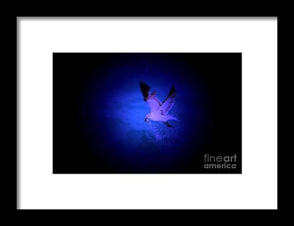 Birds Framed Print featuring the digital art Fish Groceries by Rana Adamchick