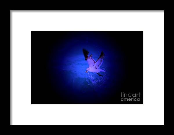 Birds Framed Print featuring the digital art Fish Groceries by Rana Adamchick