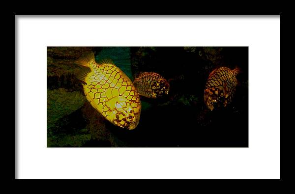 Fish Framed Print featuring the photograph Fish by Misty VanPool