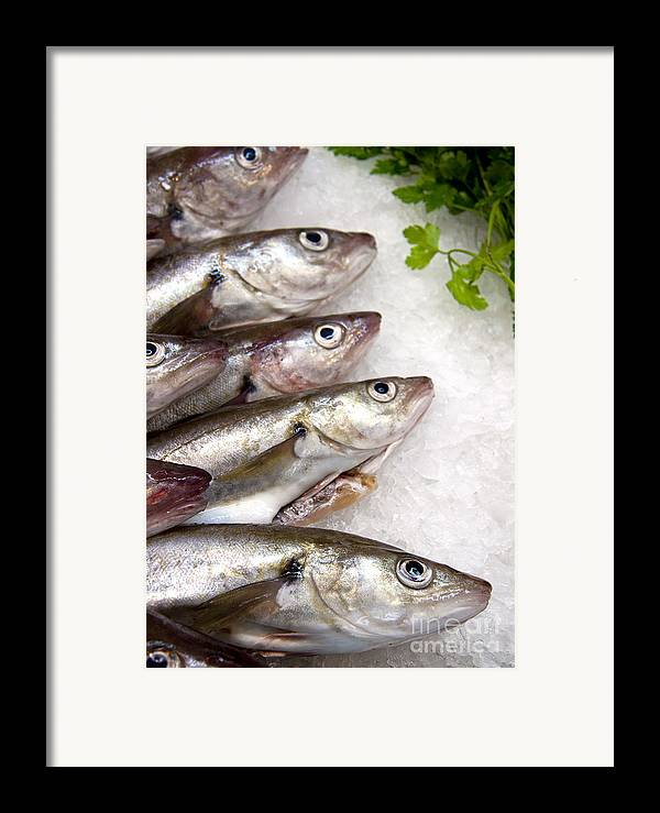 Animal Framed Print featuring the photograph Fish On Ice by Jane Rix
