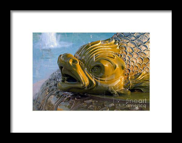 Fish Framed Print featuring the photograph Fish Out Of Water by David Lee Thompson